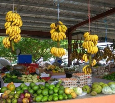 San ignacio farmers market