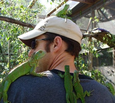 san ignacio iguana hatchery